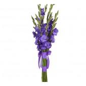 9 фиолетовых гладиолусов