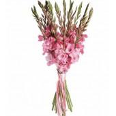 19 розовых гладиолусов