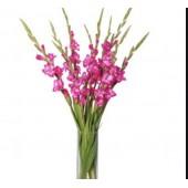 9 розовых гладиолусов в вазе
