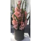 9 розовых гладиолусов в коробке
