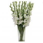 25 белых гладиолусов в вазе
